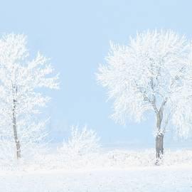 Frosty January Morning  by Lori Frisch