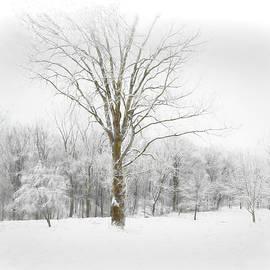 Frosty Morn... by Mary Lynn Giacomini