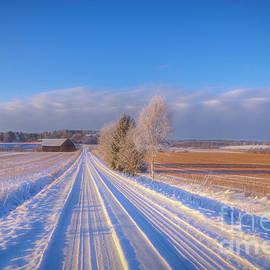 Frosty morning 3 by Veikko Suikkanen