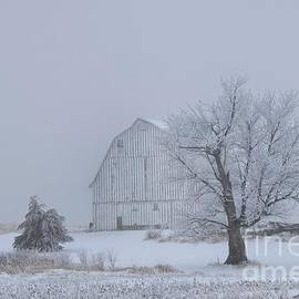 Frosty morning by Laurie Wilcox