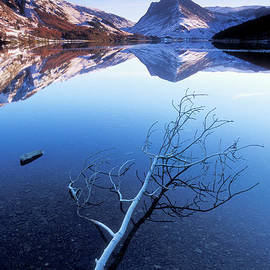 Frosty tree on Buttermere, Lake District, Cumbria, England by Neale And Judith Clark