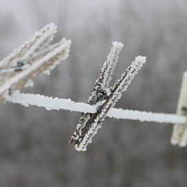 Frozen Fog on Clothes Line by James S