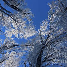 Frozen fractals by Tibor Tivadar Kui