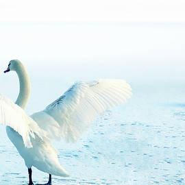 Frozen Swan Lake by Angelika Vogel