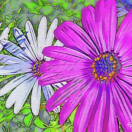 Fuchsia Daisy Against White by Rolleen Carcioppolo