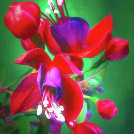 Fuchsia Flower #2 by Tom Mc Nemar