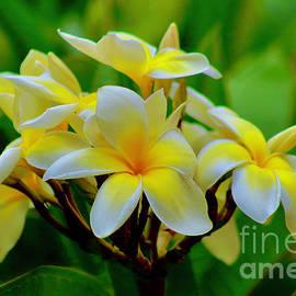 Full Frame of Aloha by Craig Wood
