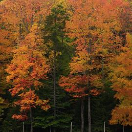 Fulton Chain Craft Foliage by Linda MacFarland