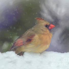 Fun In The Snow - Female Cardinal by Kerri Farley