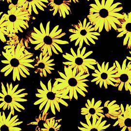 Funky Yellow Flowers by Aleksandar Djordjevic