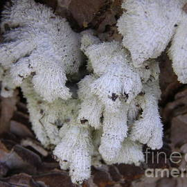 Furry hands of Lichen, Australian Native.  by Rita Blom
