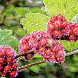 Fuzzy Sumac Berries by Maria Keady