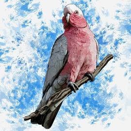 G is For Galah by Joan Stratton