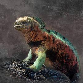 Galapagos marine iguana by Richard Smith