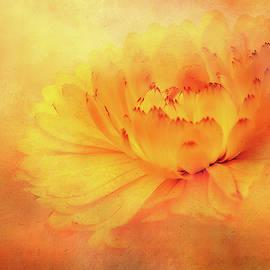 Garden Beauty by Terry Davis