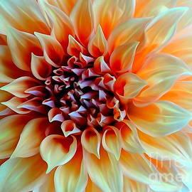 Garden Blooms #75 by Ed Weidman
