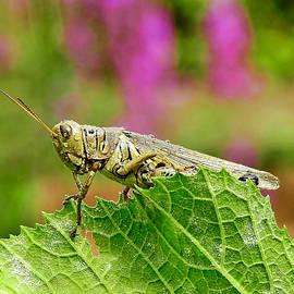 Garden Grasshopper by Carmen Macuga