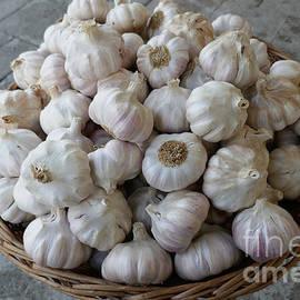 Garlic by Johanna Zettler