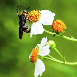 Gathering Nectar by Donna Kaluzniak