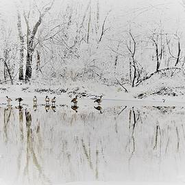 Geese in a Row 2 by Debbie Turrisi