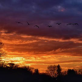 Geese in the Sunset by Maria Keady