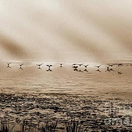 Geese Landing On Lake - Monochrome by Anthony Ellis