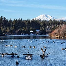 Geese on the Deschutes River by Dana Hardy