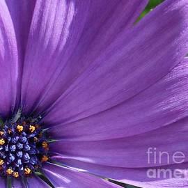 Gentle Daisy by Kathryn Jones