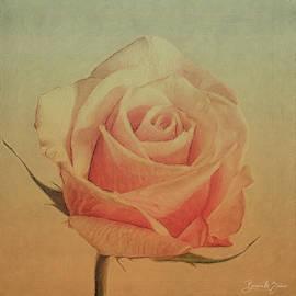 Gentleness  by Barbara Zahno
