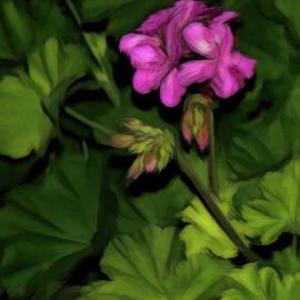 Geranium at Night by Susan Buscho