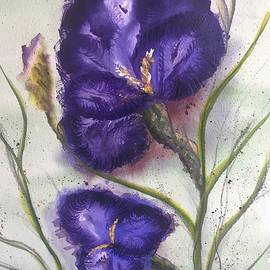 German Bearded Iris Purple by Catherine Ludwig Donleycott