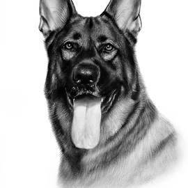 German Shepherd by Danguole Serstinskaja