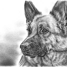 German Shepherd by Remrov