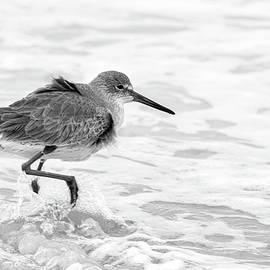 Getting my Feet Wet by Dawn Currie