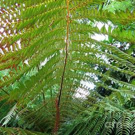 Giant Ferns by Kathryn Jones