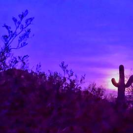 Giant Saguaro Cactus Super Moonrise in Cancer by Judy Kennedy