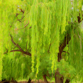 Giant Willow Tree by Elizabeth Coughlan