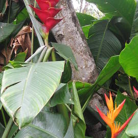 Ginger Root, Bird of Paradise, on the Road to Hana, Maui, Hawaii  by Catherine Ludwig Donleycott