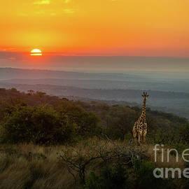 African Sunrise by Jamie Pham