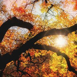 Glimpses Of Fall Colors  by Saija Lehtonen