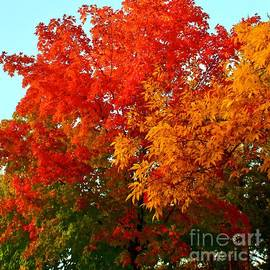 Glorious Fall Moments in Minnesota by Ann Brown