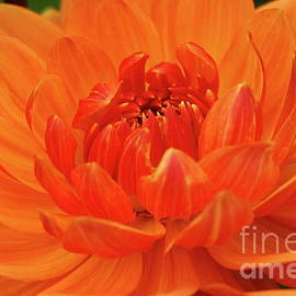 Glowing In The Sun by Christiane Schulze Art And Photography