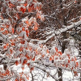 Glowing Leaves with Snow by Donna Kennedy