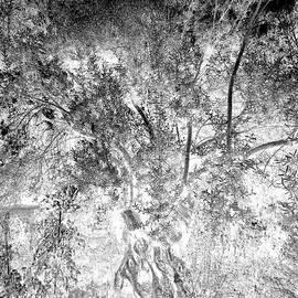 Glowing olive tree by Paul Boizot