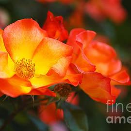 Glowing Orange Red by Joy Watson