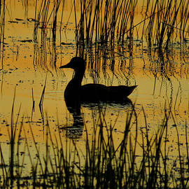 Glowing Orange Water with Duck Silhouette by Patti Deters