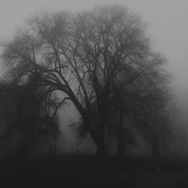 Gnarly Tree by Bill Tincher