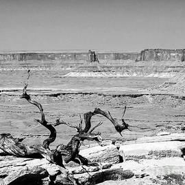 Gnarly Tree BW Grand View Trail Canyonlands National Park Moab Utah by Wayne Moran