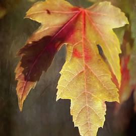 Gold Leaf by David Beard