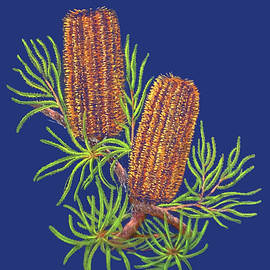 Golden Banksia  by Alison A Murphy